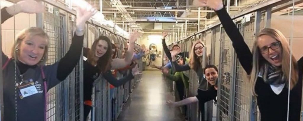 Heartwarming! Animal Shelter Celebrates When All Its Dogs Adopted in Time for Christmas