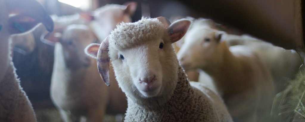 Ripping apart your inner sheep – break your chains and find your true purpose