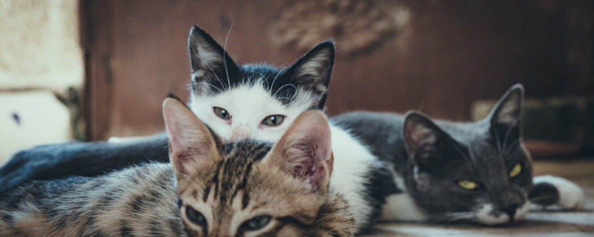 8 fun facts about cats only cat-lovers will understand